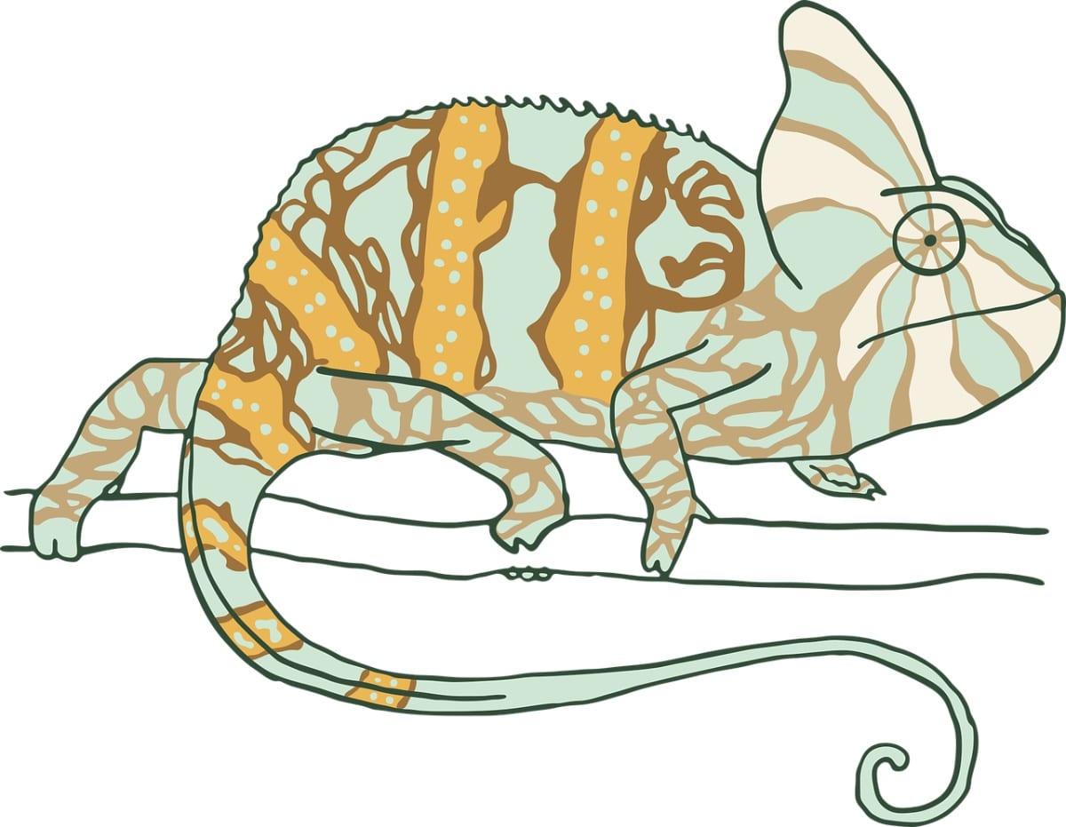 Un camaleón camuflándose puede inspirarte