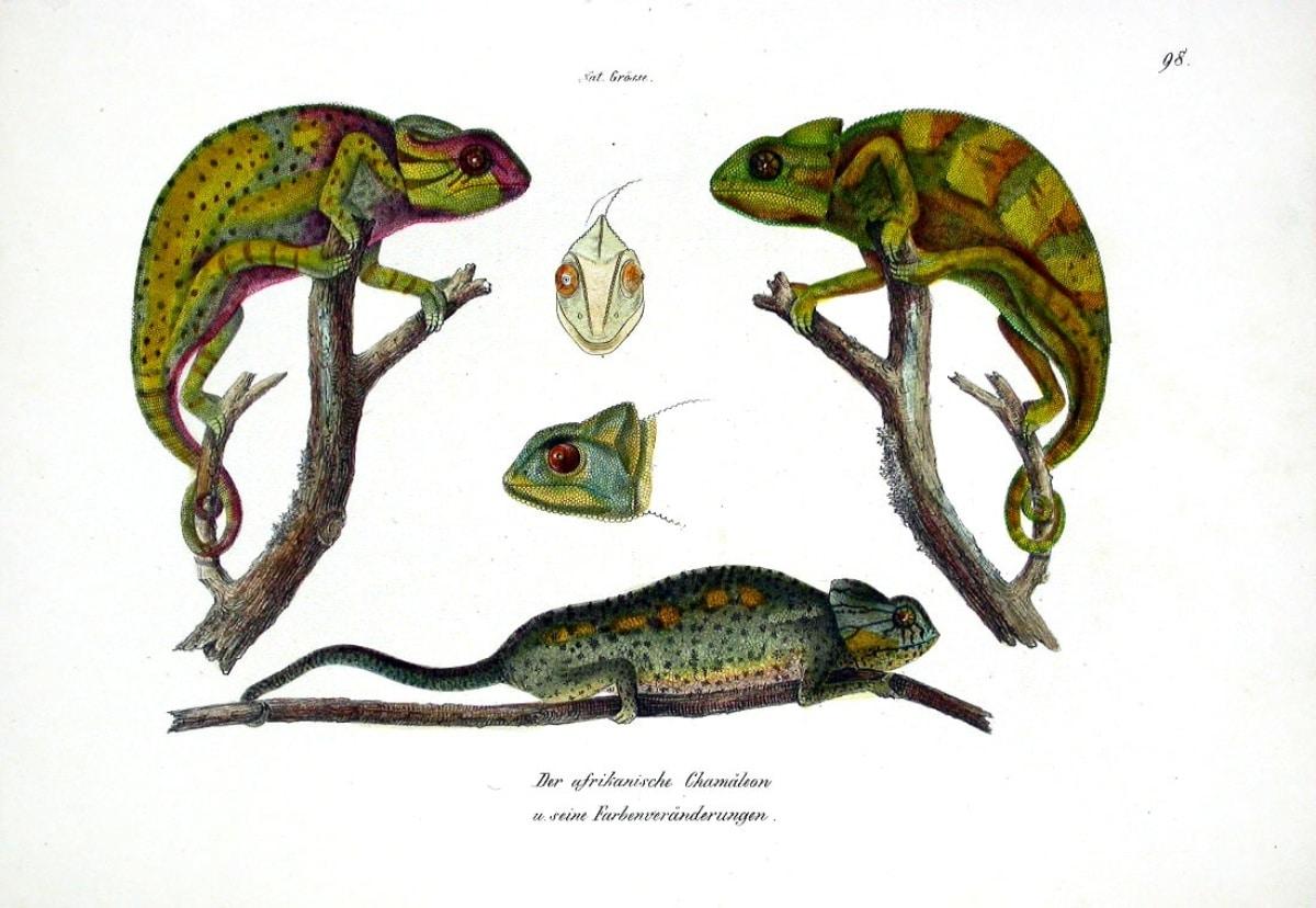 Fíjate en las ilustraciones como esta para conocer al detalle a este animal
