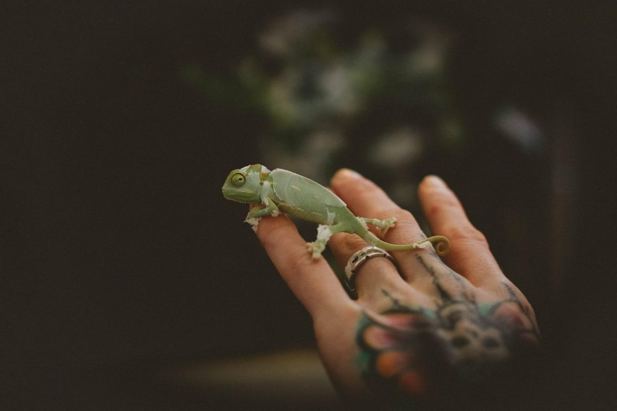 Un camaleón en una mano tatuada