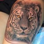 Tatuajes de tigres