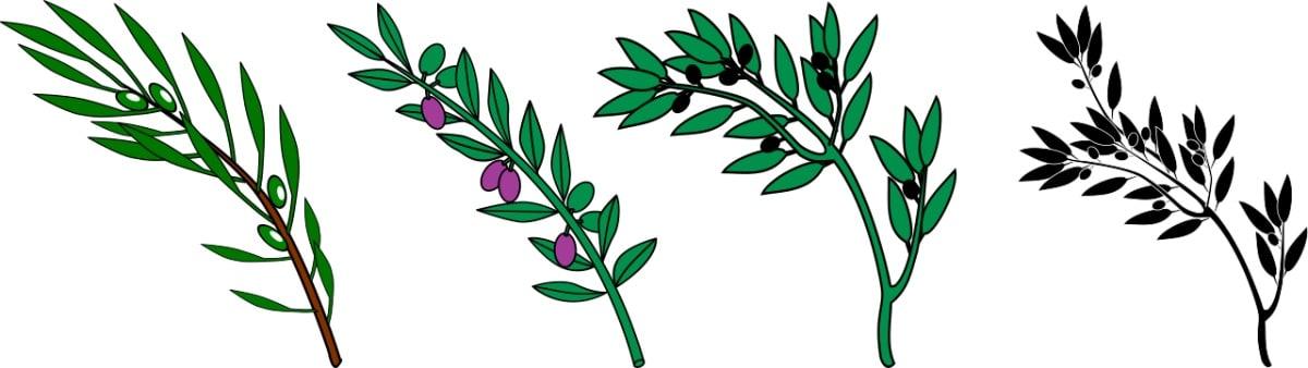 Distintas variedades de olivo