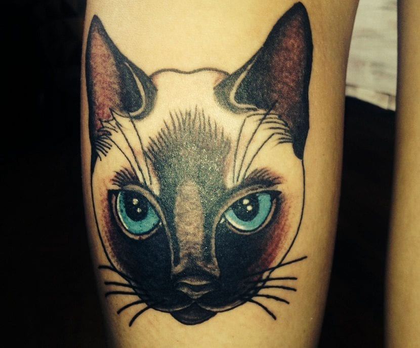 Tatuajes de gatos siameses for Tatoo gatos