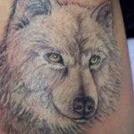 Rostro perro lobo