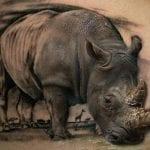 Tatuajes de rinocerontes