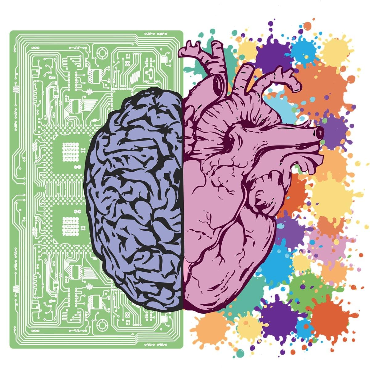 Dibujo de cerebro y corazón