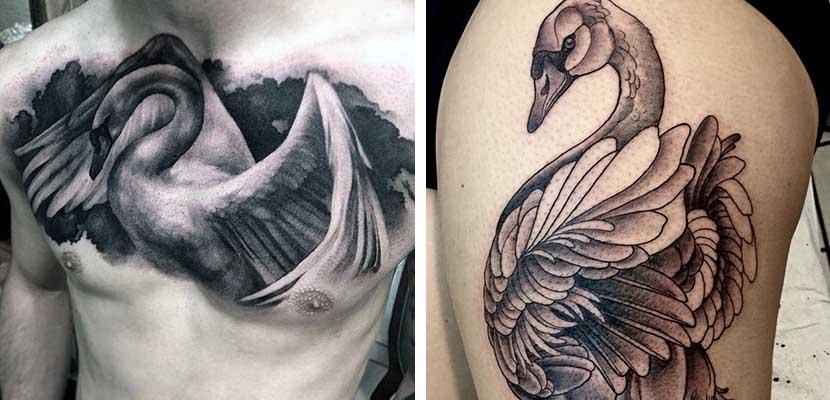 Tatuajes de cisnes