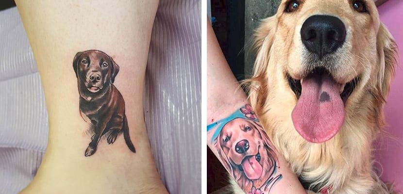 Tatuajes caninos