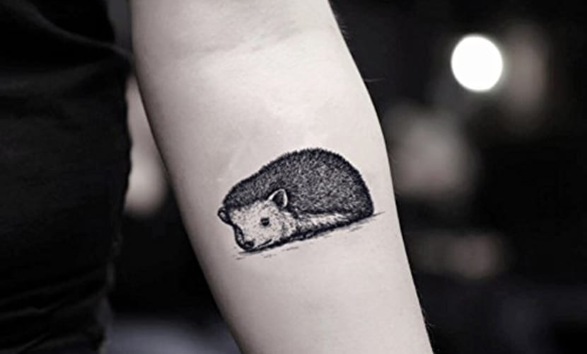 Tatuajes de erizos
