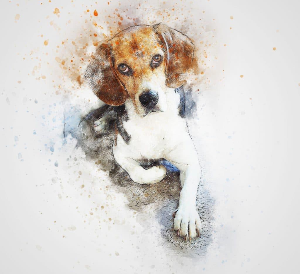 Tatuaje de Beagle Dibujo